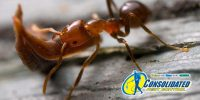 consolidated pest control blog ehader